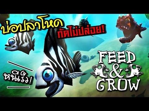 อเมซอน บ่อปลามหาโหด!!  | Fish FEED AND GROW #7