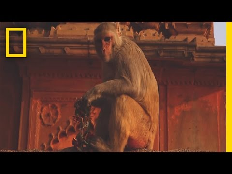 A Whirlwind Journey Through Varanasi, India—and Beyond | Short Film Showcase