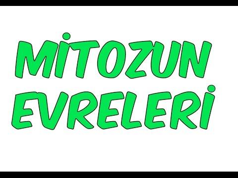 Mitoz Bölünme Evreleri -1   TYT Biyoloji 2022 #hedefekoş
