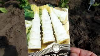 VLOG: Спаржевый салат или спаржа, что за ужас ужасный?Цветет спаржевая фасоль и спеют помидоры
