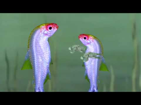 A Brief Philosophical Deconstruction Of The Fish Slapping Dance