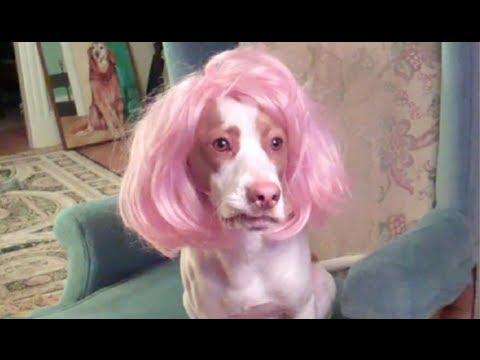 Drag Dog Loves Pink Wig You