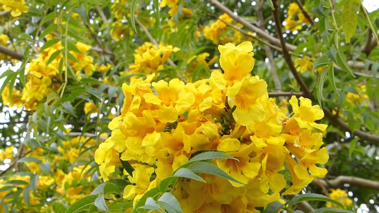 flora brasileira primavera flores flowers brazilian brasil spring