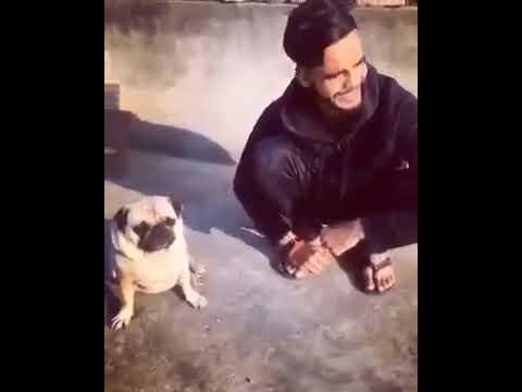 Funny Dog Slap 2017