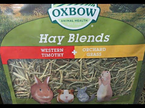 Hay For Guinea Pigs: Types, How Much & Why Feed It