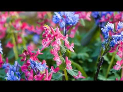 Garden Visits - RHS Wisley April #2