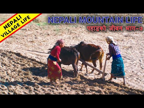 Nepali Mountain Lifestyle - Part 7 | My home 😍 | IamSuman