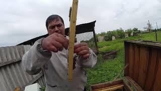 Как сделать 4 отводка от 1 семьи пчел ?