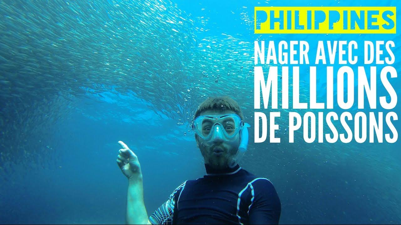 Nager Avec Des Millions De Poissons Moalboal Philippines
