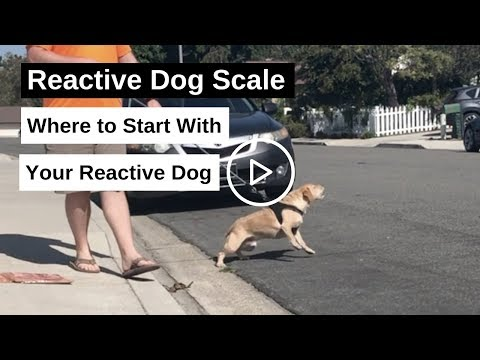 reactive-dog-scale.-where-to-start-training-your-reactive-dog
