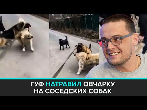 """""""Московский патруль"""": рэперу Гуфа грозит ответственность за стравливание собак - Москва 24"""