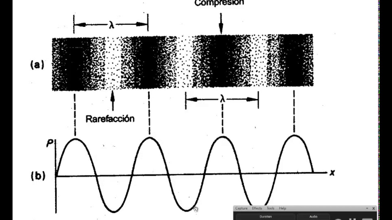 FISIOLOGÍA HUMANA: Sentido auditivo - Audición - Oído - YouTube