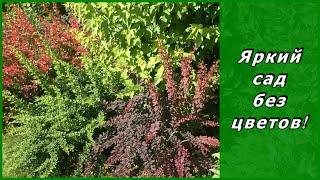 видео Миксбордер из кустарников и многолетников (41 фото): названия, готовые схемы, композиции своими руками, хвойные растения