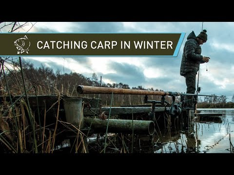 Jimmy Hibbard Catching Carp In Winter