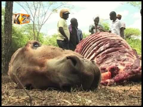 Residents find donkey and cow carcasses dumped in a thicket