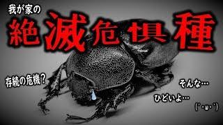 カブトムシ、#クワガタ、#マルガリータヒナカブト 昆虫採集・黒猫チャン...