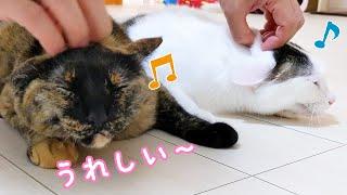 甘えモードの猫2匹をセットで撫でるパッパー