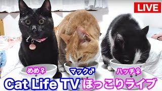 <2匹の猫通信>ハッチとマックの「ほっこりライブ」+黒猫めめ - Cat Live Stream in Japan - Cat Life TV