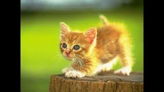 Котики и милые котята. Смешные котята играют. Много котят.