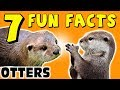 7 FUN FACTS ABOUT OTTERS! OTTER FACTS FOR KIDS! Cute! Cuteness! Learning Colors! Funny! Sock Puppet!