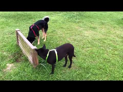 Max meets dogs in public place