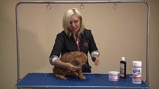 Как помыть кота при помощи Groomer's Goop - Надежда Румянцева груминг кошек