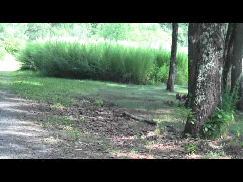 Neponset River Greenway Canton MA Signal Hill Part 3.