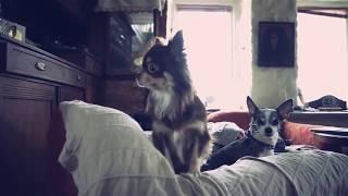 Приколы. РАЗОБЛАЧИЛИ!!! Тайная Жизнь Домашних Животных. Собаки и коты .