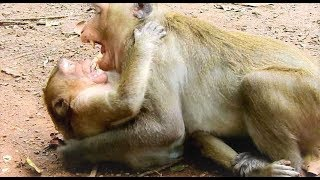 Spoil you are not my son please go away/ Poor Sweetpea No one care Youlike Monkey 1958