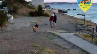 Дрессировка собак - ЗКС(Учебно-тренировочные занятия по упражнению ЗКС (ПР) (Н/О Ральф) 20 сентября 2011 г., 2011-10-13T22:19:35.000Z)