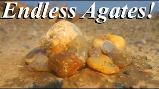 AGATES Everywhere! Awesome Full Day of Rockhounding the Yellowstone River for Montana Agates!