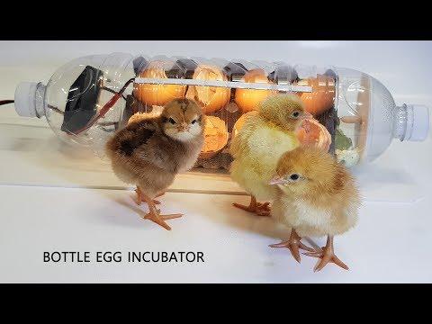 water-bottle-egg-incubator-#2-(페트병으로-부화기-만들기)