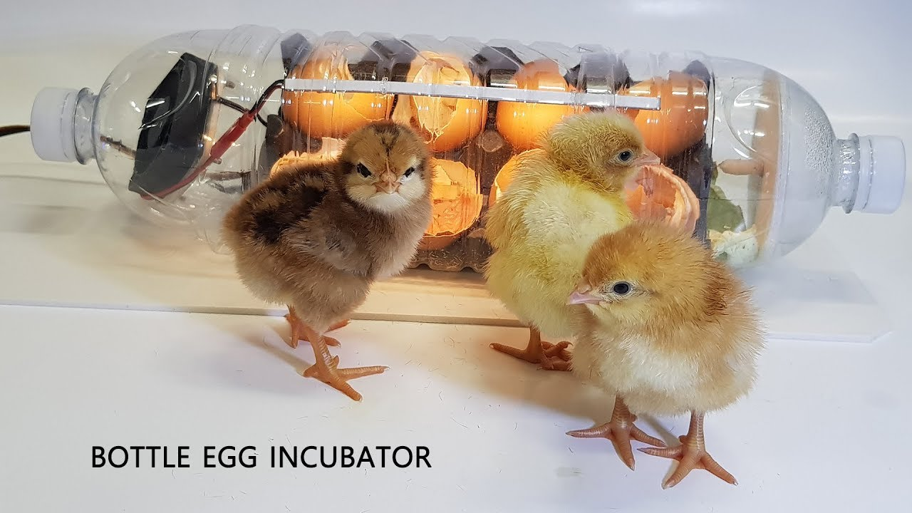 Water bottle Egg incubator #2 | Hatching Chicks with a homemade incubator