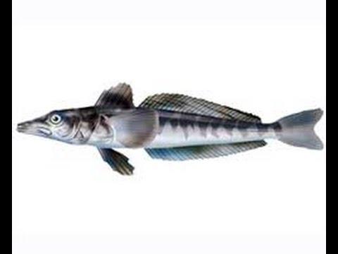 Русская  рыбалка 3.99 ледяная рыба