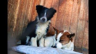 Как дружат инвалиды и собаки в Новосибирске