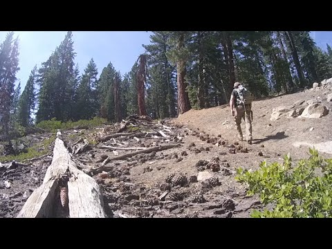 Mountain Forest Distance Radio Checks.