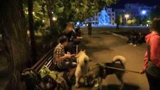 Хаски и Щенки Маламуты играют в парке