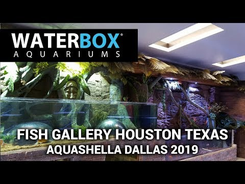 Waterbox checking out the Fish Gallery Houston booth amazing display.