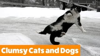 Funniest Clumsy Cats and Dogs | Funny Pet Videos