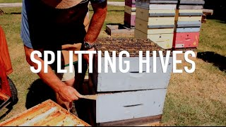 Splitting Hives