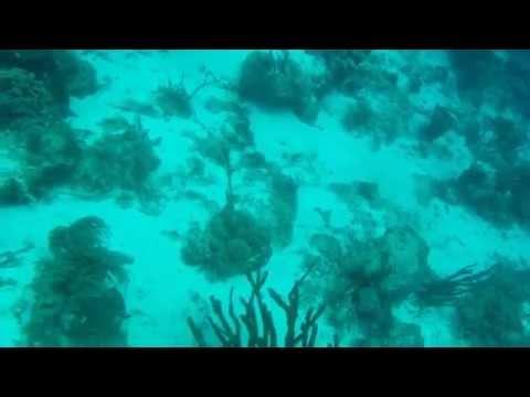 Curacao Scuba Diving 2014