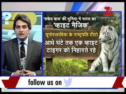 DNA : World's first' White Tiger' sanctuary opens in Madhya Pradesh