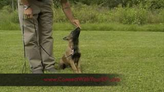 Buffalo, Ny Dog Training - 10 Week Old Puppy, K-9 Connection