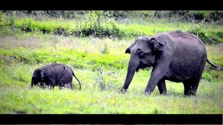 Wayanad - A Short Film on Wayanad Tourist Spots