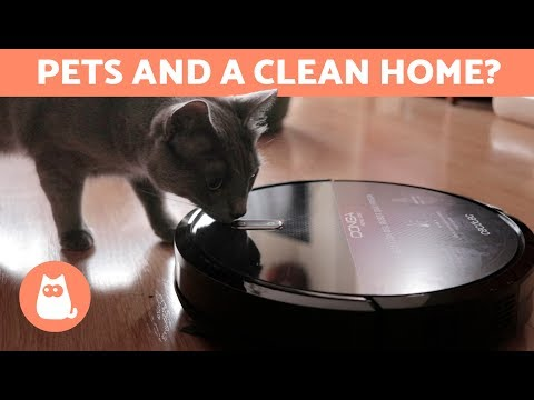 Pet Corner - How to Keep a Clean Home if You Have Animals - 6 TIPS