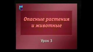 Биология. Урок 3. Ядовитые грибы России. Часть 1