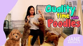 QUALITY TIME WITH MY TOY POODLES