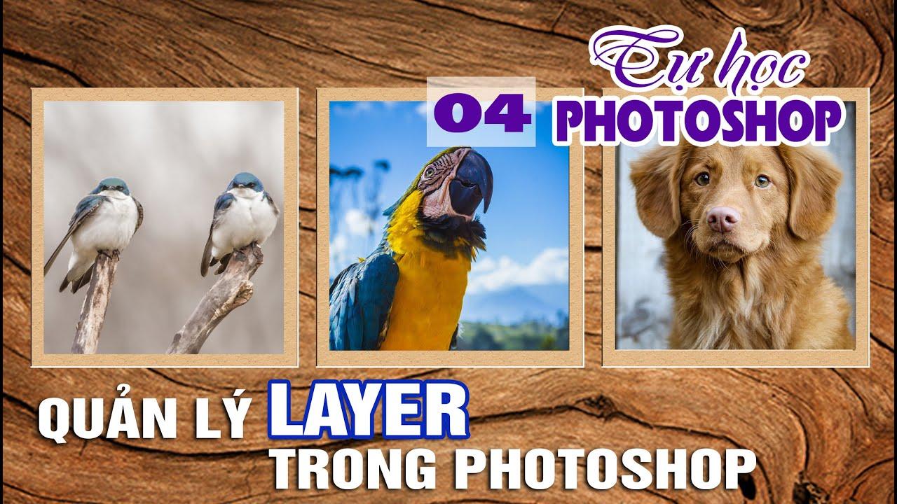 Bài 4: Quản lý photoshop với layer