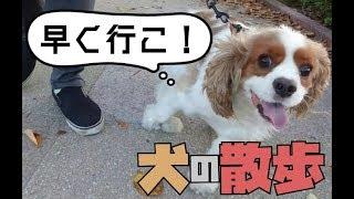 キャバリアりんちゃんねるの裏側(ブログ) http://rincavalier.com/ □T...