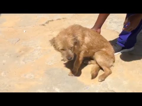Chained Dog Breaks Free- Adopted!